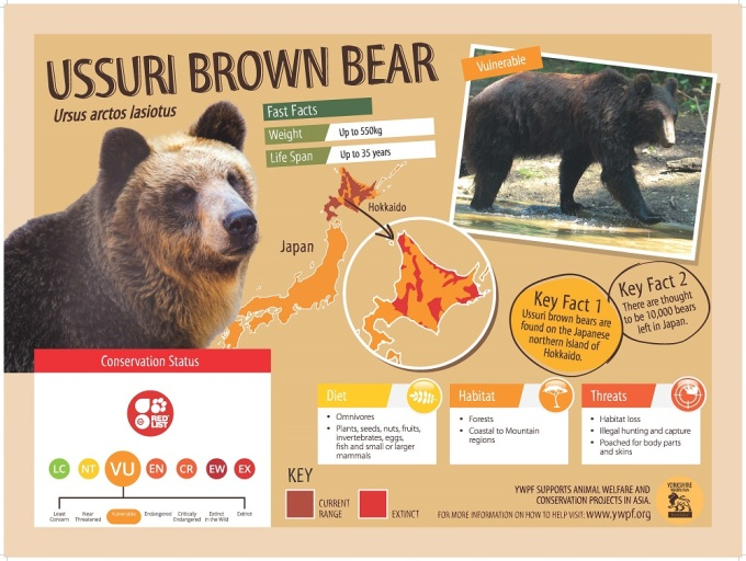 Ussuri-Brown-Bear-2